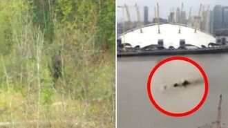 8 Mythical Creatures Caught On Camera