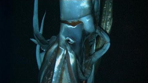 Discovering the Giant Squid Curiosity