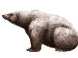 Alaskan Giant Polar Bear