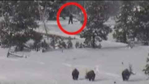 Bigfoot Family Caught on Tape!?