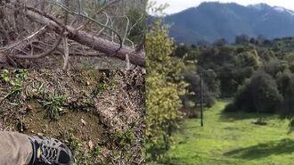 Sierra Sasquatch Project. April 2019