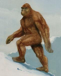 Gorillaa