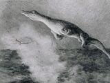 U-28 Creature