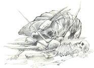 Golden clip crayfish