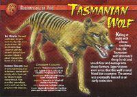 Tasmanian Wolf front