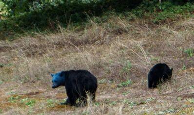 Blue-bear-570x339