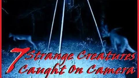 7 Strange Creatures Caught On Camera