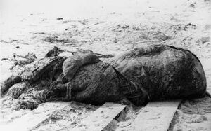 St augustine carcass lusca