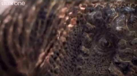 Carcharodontosaurus Fight - Planet Dinosaur