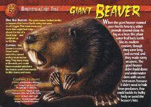 Giant Beaver front