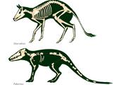 Cryptid Evolution