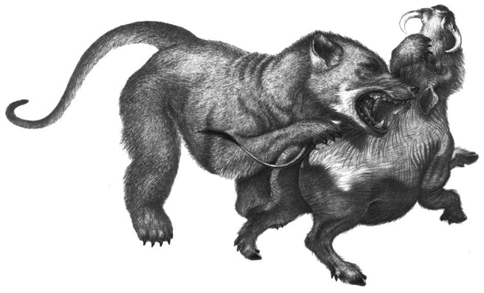 Amphicyonidae