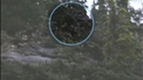 Bigfoot Video a Hoax? - Finding Bigfoot