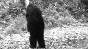 Fulton County Bigfoot
