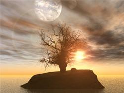 Posible photo of sun moon tree
