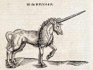 Oftheunicorn