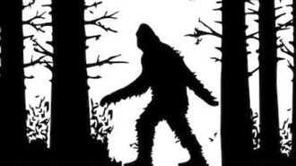 My Sasquatch Encounters.