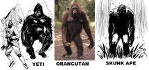 Heuvelmans Yeti Compared to Orangutan Proportions
