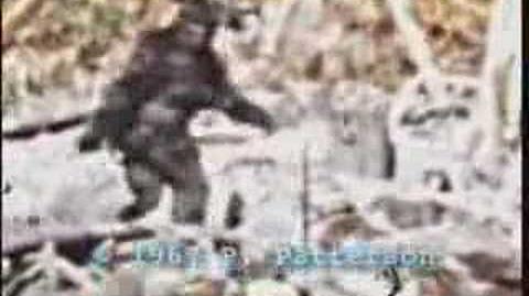 Bigfoot patterson tiagopsc