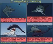 C-megalodon-hunting-strategy