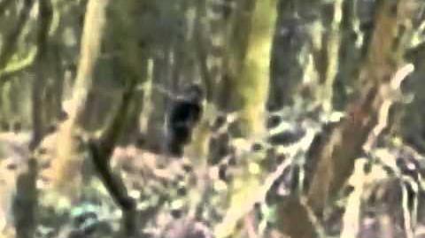 2013 British Bigfoot?
