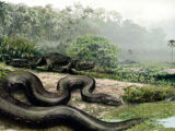 Titanoboa and largest snakes of the world