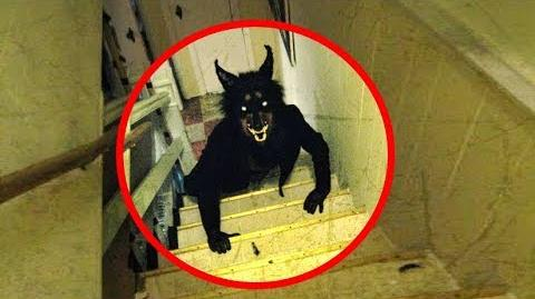 Tops 5 Real Life Werewolves Caught On Camera