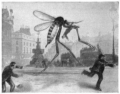 Mosquito picadilly