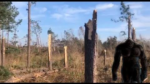Bigfoot Saves Family From Tornado Wreckage, Then Gets Rewarded