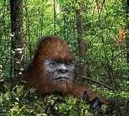 Jungle-bigfoot