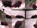 Deridder Roadkill