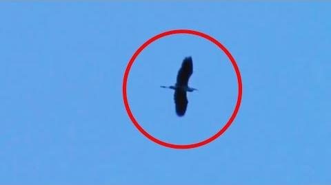 5 THUNDERBIRD CAUGHT ON CAMERA & SPOTTED IN REAL LIFE!