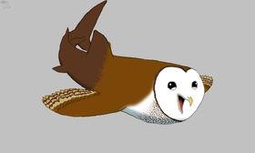 Basking owl