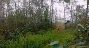 Bigfoot-greenwater-canada
