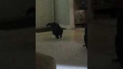 Werecat caught on film-2