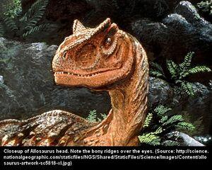 Allosaurus6