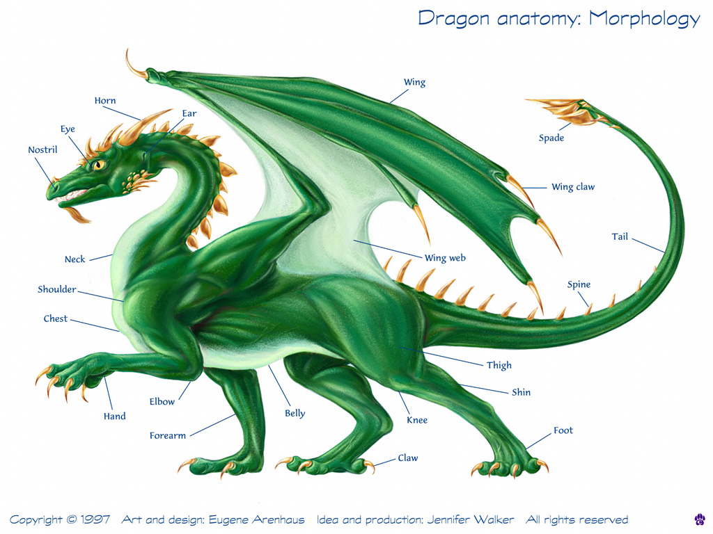 Dragon Cryptid Wiki FANDOM powered by Wikia