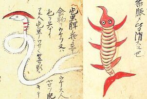 Hizo-no-kasamushi & Akuchu