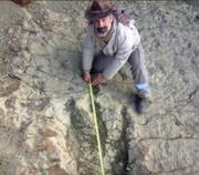 Dino Footprint