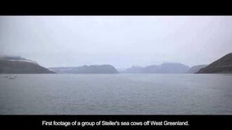 Steller's sea cow rediscovery in Greenland
