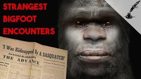 5 Strangest Bigfoot Encounters in History