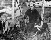 Wilf Batty last wild Thylacine