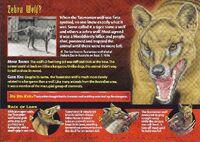 Tasmanian Wolf back