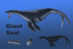 Giant seal size comparison by spearhafoc-d6cqm1l