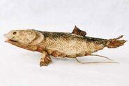 Casualwalkfish