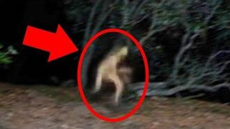 5 Mysterious Creatures Caught On Camera Top 5 STRANGE Creatures