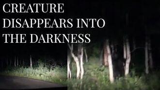 AMAZING BIGFOOT FOOTAGE - Strange Creature Filmed lurking in the treeline - MBM 92