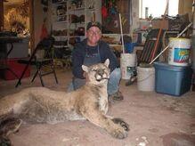 Huntingdon-PA-cougar