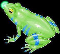 Cameroon frog