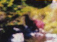 Moa 1993